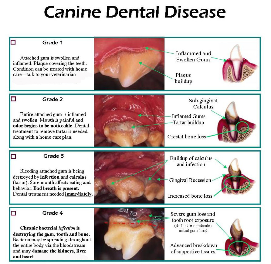 Dental-Disease Better